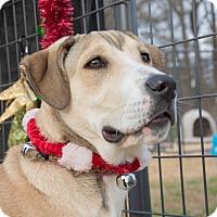Adopt A Pet :: Milo - $250 - Seneca, SC