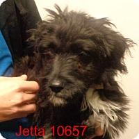 Adopt A Pet :: Jetta - baltimore, MD