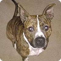 Adopt A Pet :: Cole - Cincinnati, OH