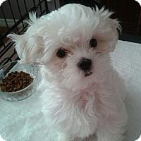 Adopt A Pet :: Jeremy - San Dimas, CA