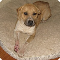 Adopt A Pet :: Rossy-ADOPTED - Somerset, KY