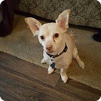 Adopt A Pet :: Buddy Turner - Urbana, OH