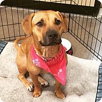 Adopt A Pet :: Pookie - Phoenix, AZ