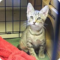 Adopt A Pet :: Taz - Randleman, NC