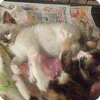 Adopt A Pet :: sisters - Bayside, NY