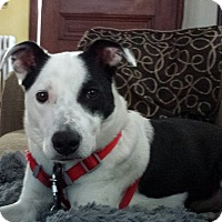 Adopt A Pet :: Bessie - Boston, MA