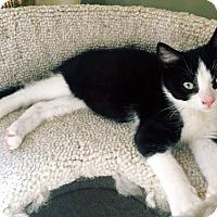 Adopt A Pet :: Nod - Toronto, ON