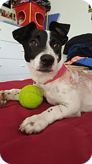 Terrier (Unknown Type, Medium) Mix Dog for adoption in Valencia, California - Lil Wonder