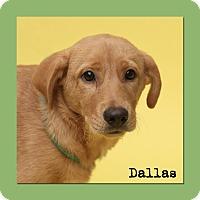 Adopt A Pet :: Dallas - Aiken, SC