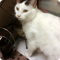 Adopt A Pet :: Marshmallow - Tiffin, OH
