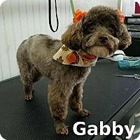 Adopt A Pet :: Gabby - Shreveport, LA