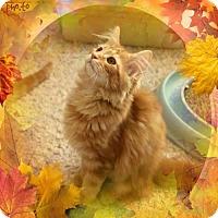 Adopt A Pet :: Simona - Cincinnati, OH