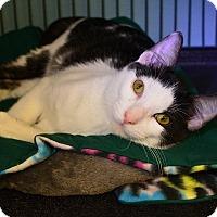 Adopt A Pet :: Kibble - Tomball, TX