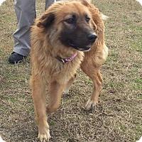Adopt A Pet :: Maggie - Auburn, MA