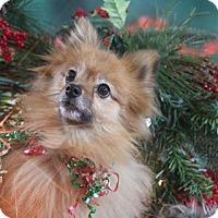 Adopt A Pet :: Jakki - Dallas, TX