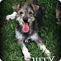 Adopt A Pet :: JIFFY - Phoenix, AZ