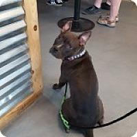 Adopt A Pet :: Kira - Palm Springs, CA