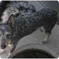 Adopt A Pet :: Deuce - Phoenix, AZ