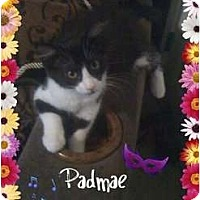 Adopt A Pet :: Padmae - Mobile, AL