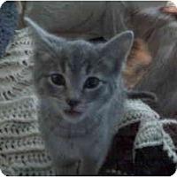 Adopt A Pet :: Hanna Beth - Erie, PA