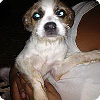 Adopt A Pet :: Bonnie - Alamosa, CO