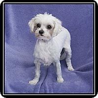 Adopt A Pet :: Macy - Fort Braff, CA