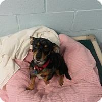 Adopt A Pet :: Fido - Muskegon, MI