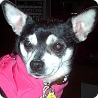 Adopt A Pet :: Mitzi 2015 (m/c) - Chesterfield, MI