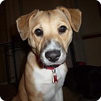 Adopt A Pet :: Aspen - Dearborn, MI