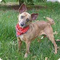Adopt A Pet :: Crissy - Mocksville, NC