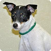 Adopt A Pet :: Khloe - Port Washington, NY