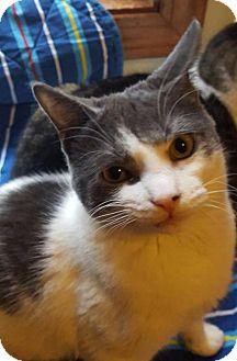 Domestic Shorthair Kitten for adoption in New Bedford, Massachusetts - Trouble