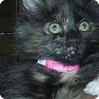 Adopt A Pet :: Scalloped Potato - Medina, OH