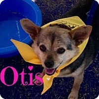 Adopt A Pet :: Otis - Scottsdale, AZ