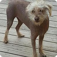 Adopt A Pet :: Sebastian - Washington, DC