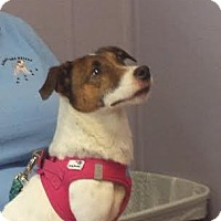 Adopt A Pet :: RUSTY - Terra Ceia, FL