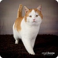 Adopt A Pet :: Cheeks - Eagan, MN