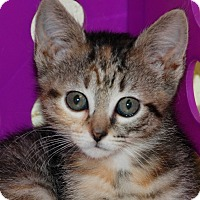 Adopt A Pet :: Tippie - Salem, WV