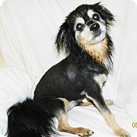 Adopt A Pet :: Danny - Umatilla, FL