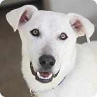 Adopt A Pet :: MUSHU - Kyle, TX