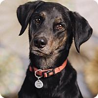 Adopt A Pet :: Gibbs - Portland, OR