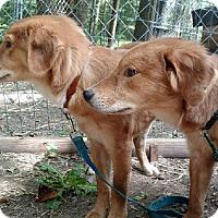 Adopt A Pet :: Slim & Jessie - Capon Bridge, WV