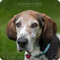 Adopt A Pet :: Mattie - Sheboygan, WI