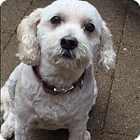 Adopt A Pet :: Bailey - St Helena, CA