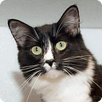 Adopt A Pet :: Chloe - Prescott, AZ