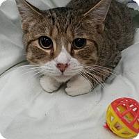 Adopt A Pet :: Timmy - Flemington, NJ