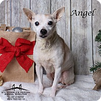 Adopt A Pet :: Angel - Luling, LA