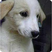 Adopt A Pet :: Jonah - Hagerstown, MD