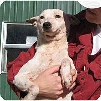 Adopt A Pet :: Walter - kennebunkport, ME