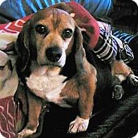 Adopt A Pet :: Matilda - Novi, MI